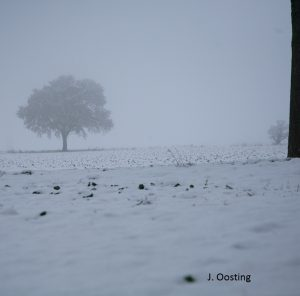sneeuw-in-hamburg-boom